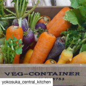 よこすか野菜